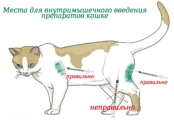 уколы животным от аллергии