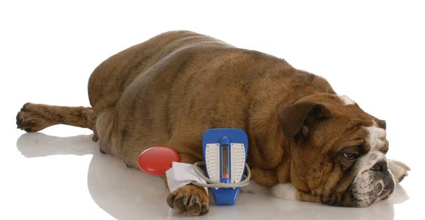 Что делать если у собаки сахарный диабет